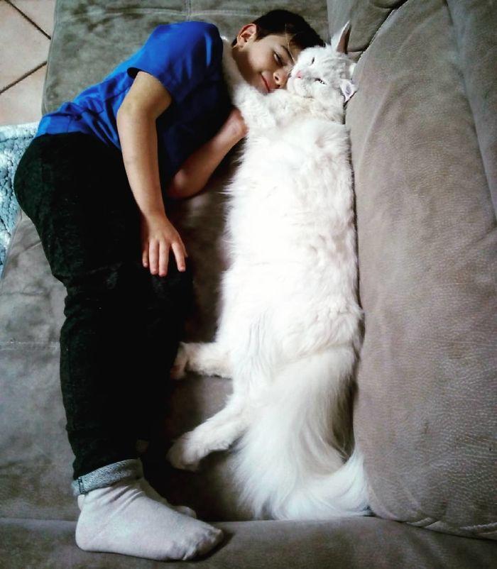 В сети собрали фото самых длинных котов